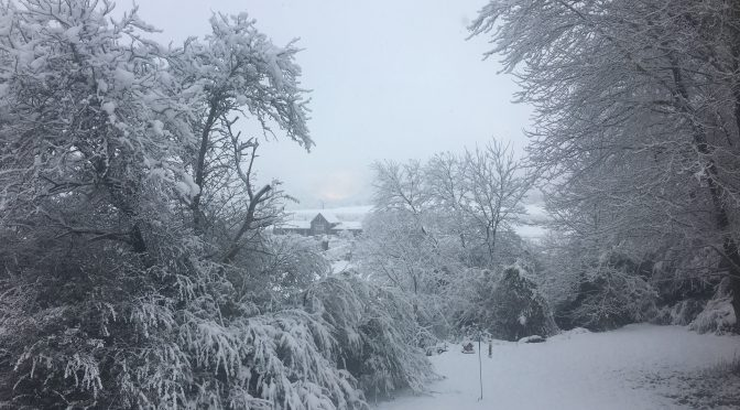 Snowfall in Highlands Cashiers Area